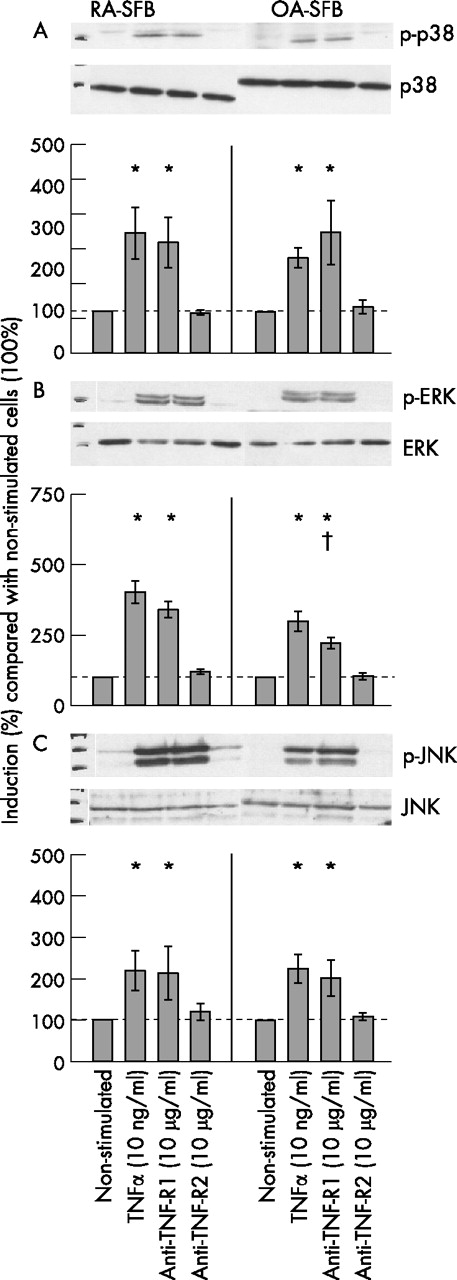 Predominant activation of MAP kinases and pro-destructive