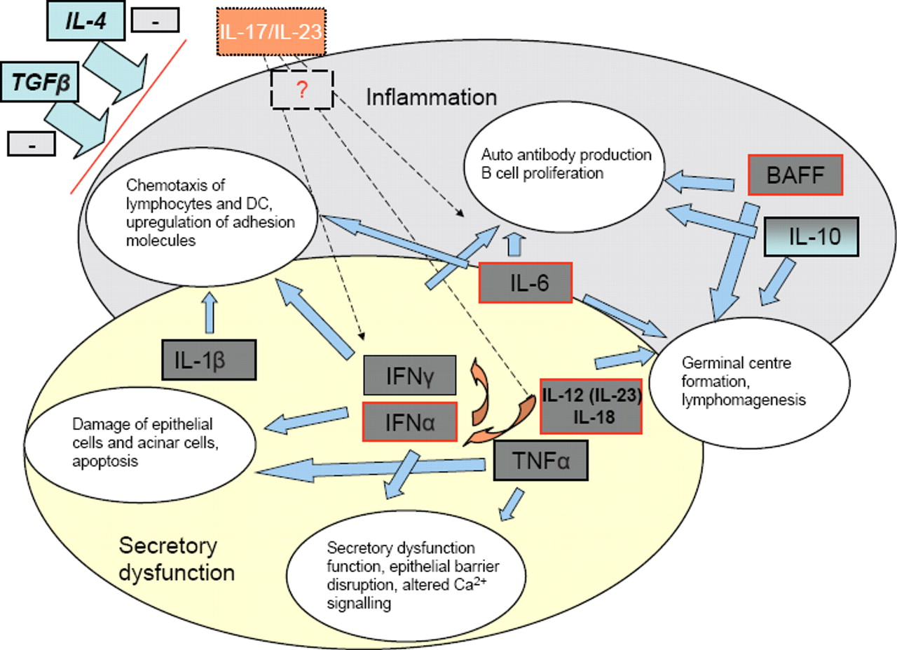 Cytokines in Sjögren's syndrome: potential therapeutic