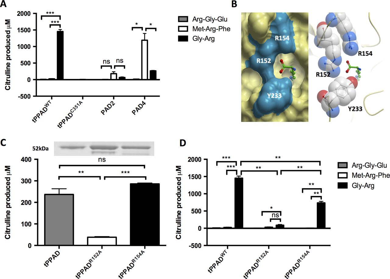 peptidylarginine deiminase and neurodegenerative diseases Prion prions are unique unconventional infectious pathogens propagated by alternatively folded cellular prion proteins (prp c) that give rise to a devastating neurodegenerative disease in.