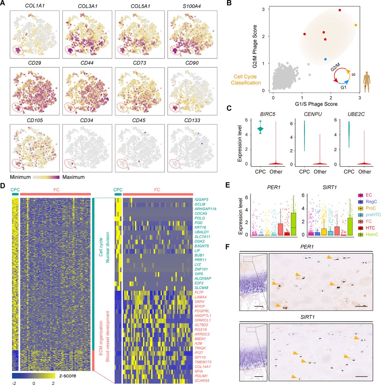 Single-cell RNA-seq analysis reveals the progression of human
