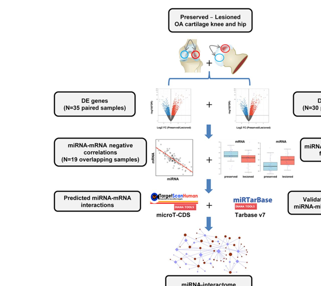 RNA sequencing data integration reveals an miRNA interactome