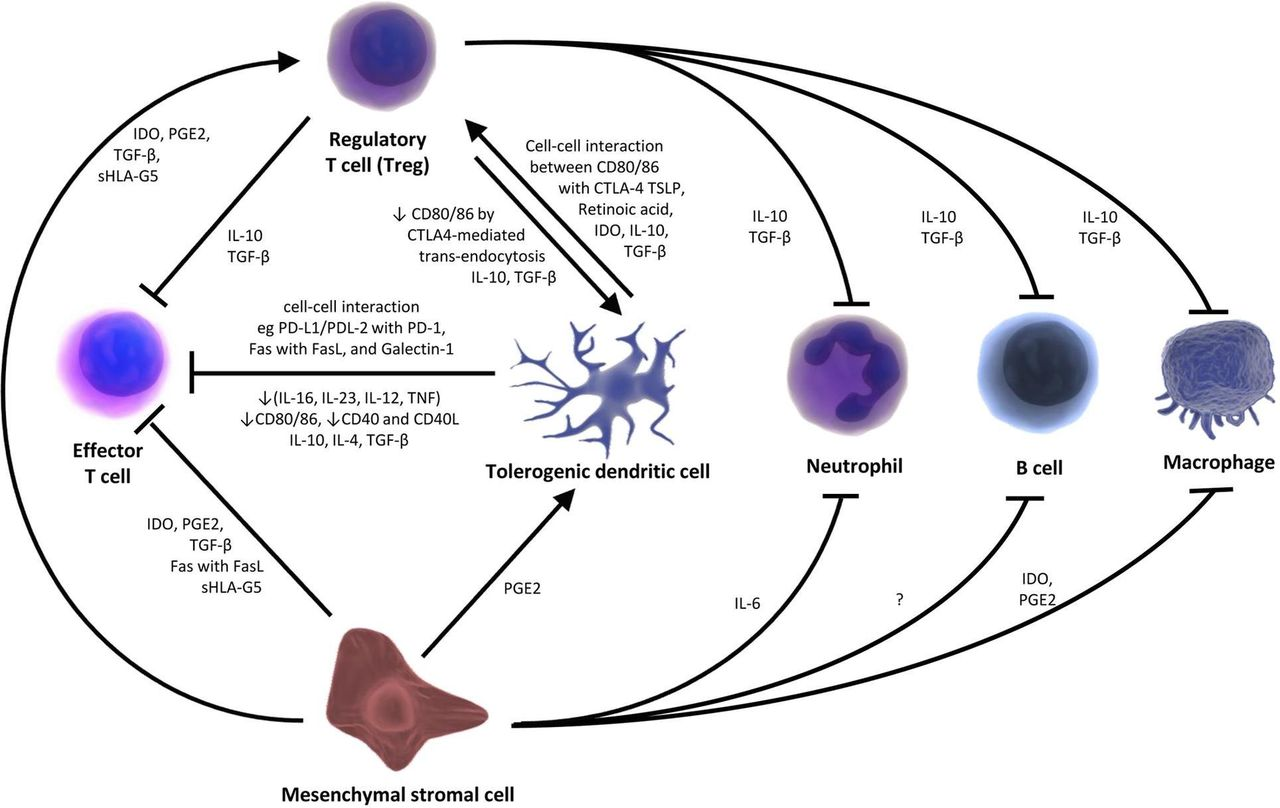 Tolerising cellular therapies: what is their promise for