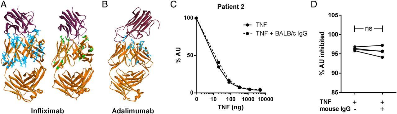 neutralizing antibody assay development