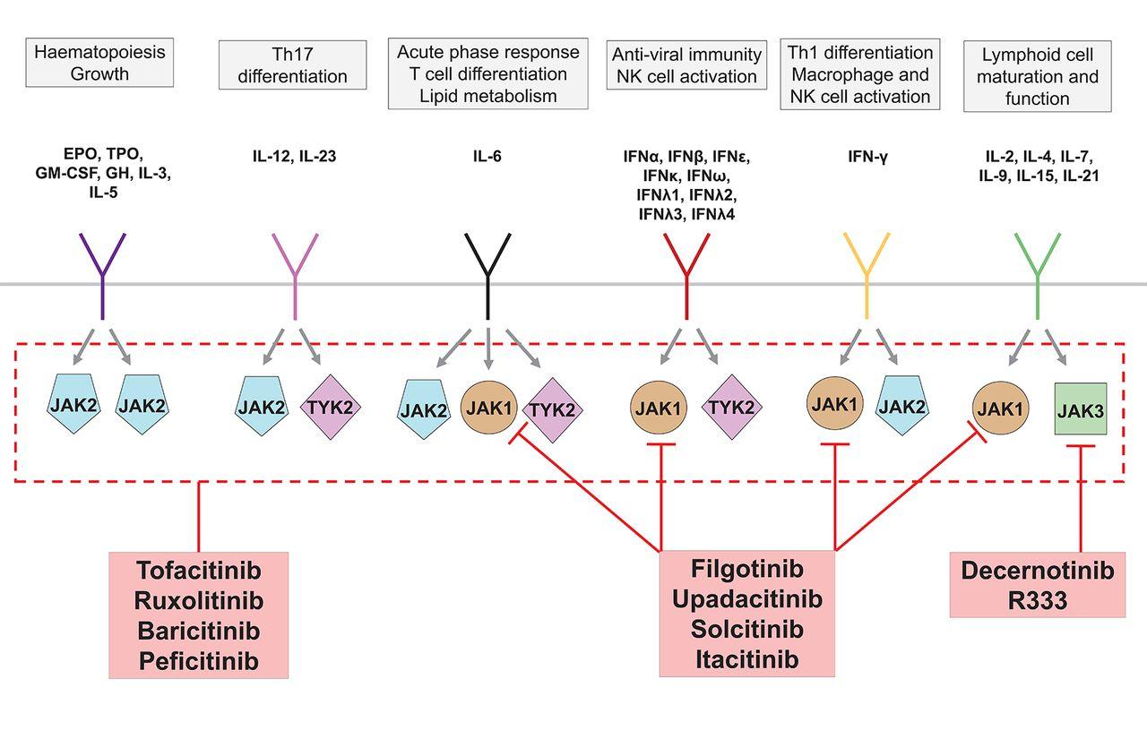 Novel Therapies For Immune Mediated Inflammatory Diseases
