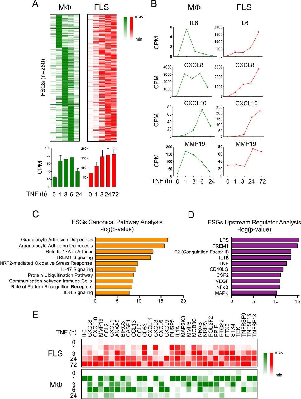 TNF-induced inflammatory genes escape repression in fibroblast-like